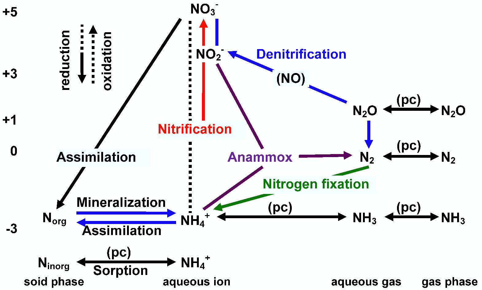 Biological and physical cycle biogeochemical and physical chemical pc processes affecting the speciation of nitrogen in aquatic systems highlighted are some of the major reactions pooptronica Choice Image