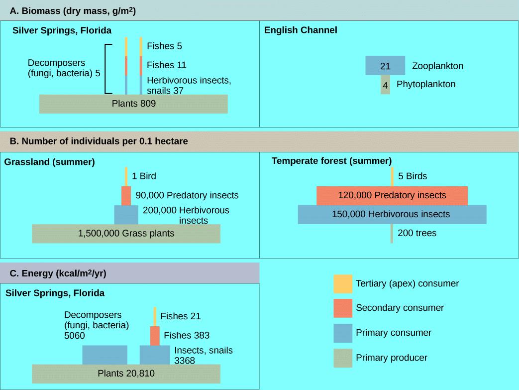 relationship between trophic level and energy flow in ecosystem