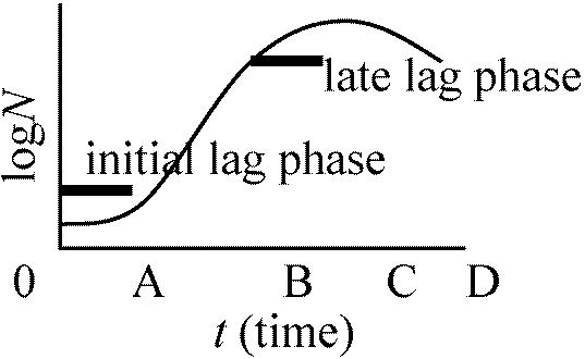 エリュシペロトリクス綱